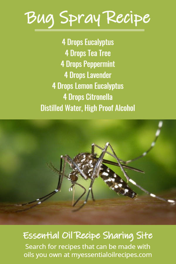 Infographic - Recipe for Essential Oil Bug Spray