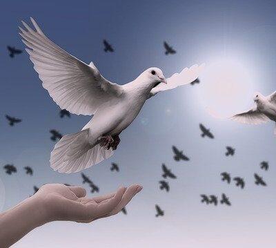 Calming dove